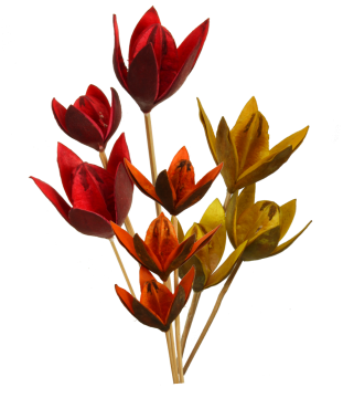Wildlilie am Stiel 3fach Farbmix  (50 Stück)