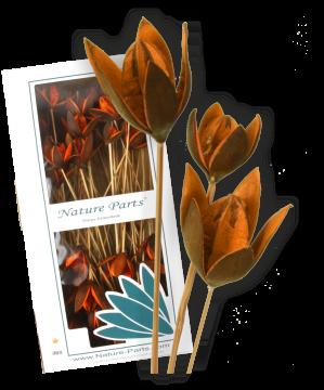 Wildlilie am Stiel in Orange (50 Stück)