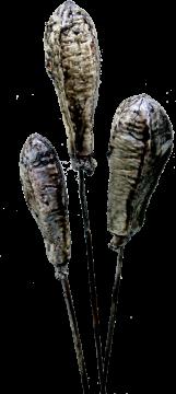 Mehogany am Stiel gewachst mocca grey  (80 Stück)