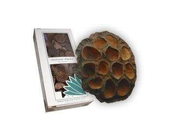 Lotus Kolben groß in Natur (ca. 7-9cm) (100 Stück)
