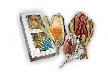 Banksia 3fach Mix mit Stiel  (12 Stück)