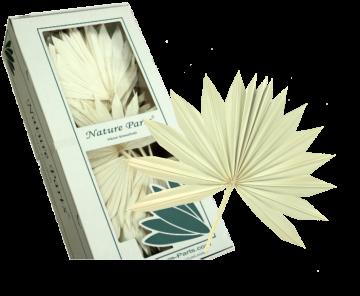 Sun Palm Cut gebleicht  (30 Stück)