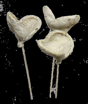 Badam am Stiel gewachst in Creme Weiß  (40 Stück)