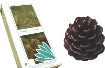 Halepensis Zapfen Natur am Draht gelackt (50 Stück)