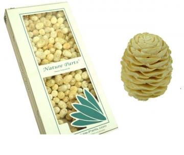 Sabulosum Zapfen Ø 4-5cm Gebleicht (2 kg)