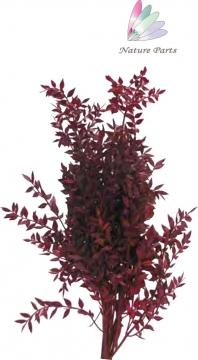 Ruskus Zweig gefärbt in Rot ( 250g )