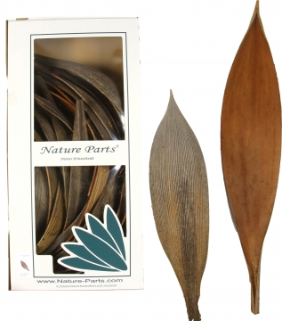 Cocosschale Kokosblatt in Natur [ca. 30cm lang] (25 Stück)