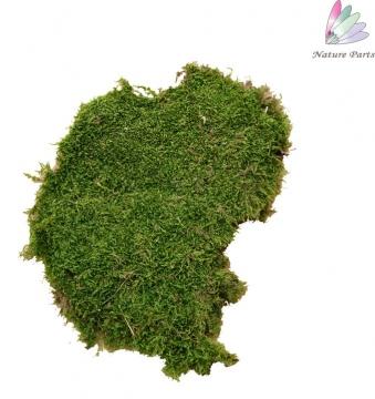 Plattenmoos grün (500 g)
