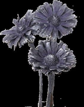 Protea geschnitten medium in Frosted Purple (40 Stück)