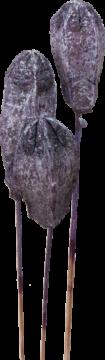 Mehogany am Stiel in Frosted Purple (100 Stück)