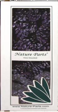 Schwarzkiefer Zapfen am Stab in Frosted Purple  (50 Stück)