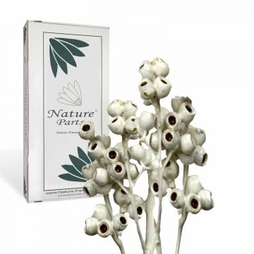 Eukalyptus Zweig mit Stiel gewachst in Creme Weiß ( 50 Stück )