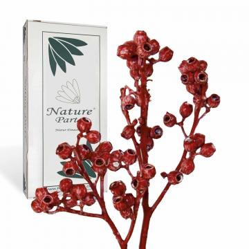 Eukalyptus Zweig mit Stiel gewachst in Rot Antik ( 50 Stück )