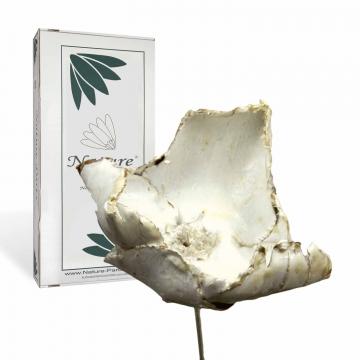 Palm Cup am Stiel gewachst in Creme Weiß  (40 Stück)