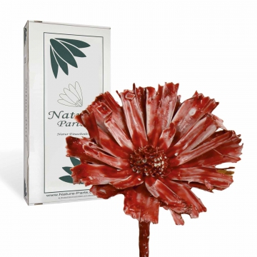 Protea geschnitten Gewachst in Rot Antik ( 40 Stück )