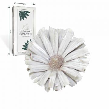 African Sun gewachst in creme weiß mit langem Naturstiel  (20 Stück)