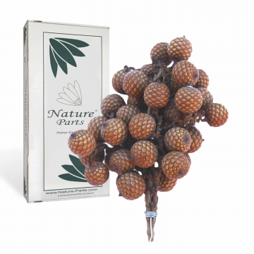 Rattan Fruchtstiel am Draht in Natur ( 15x10cm - 50 Stück )