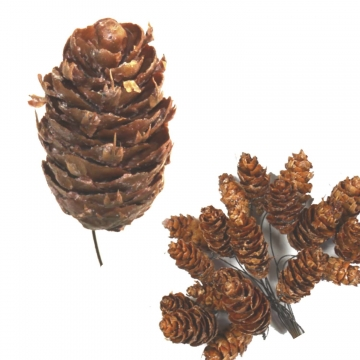 Douglas Zapfen am Draht gewachst Natur (500 Stück)