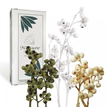 Sortiment Eukalyptus Mix ( 75 Stück )