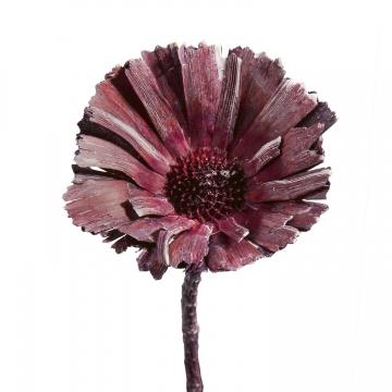 Protea geschnitten Medium in Frosted Blackberry (350 Stück)