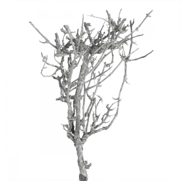 Dry Tree in Frosted Blackwashed (2 Kg)