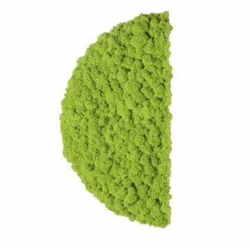 Moos ´Half Moon´ Islandmoos Apfelgrün Ø 40 cm randbemoost