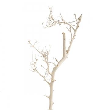 White Bush gebleicht ( 6-8 x 14-16cm ) (100 Stück)