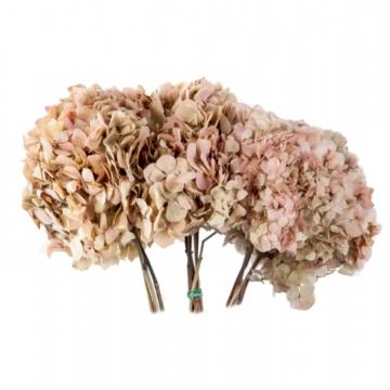 Hortensien Strauß in Bicolor Natural Cream/Pink Kopfgröße Ø 18-25cm