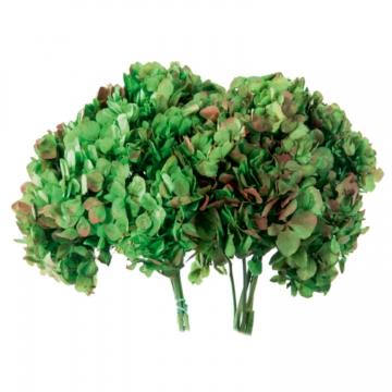 Hortensien Strauß in Bicolor Natural Green/ Red Kopfgröße Ø 18-25cm