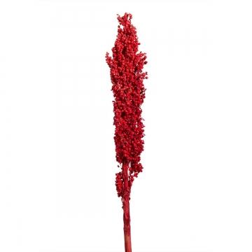 Indienkorn mit Stiel in Rot  (250 Stück)