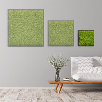 Moosbild Islandmoos 35 x 35 cm auf Holzfaserplatte anthrazit