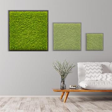 Moosbild Islandmoos 80 x 80 cm auf Holzfaserplatte anthrazit