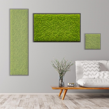 Moosbild Islandmoos 100 x 60 cm auf Holzfaserplatte anthrazit