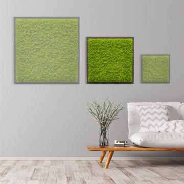Moosbild Islandmoos 55 x 55 cm auf Holzfaserplatte anthrazit