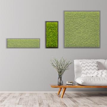 Moosbild Islandmoos 57 x 27 cm auf Holzfaserplatte anthrazit