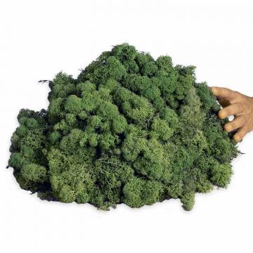 1kg Islandmoos lose präpariert und gefärbt ( lichtecht ) in Moosgrün / Dunkelgrün