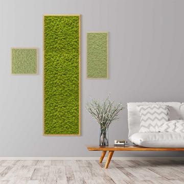 Moosbild Islandmoos 140 x 40 cm mit Tischlerrahmen aus geölter Eiche