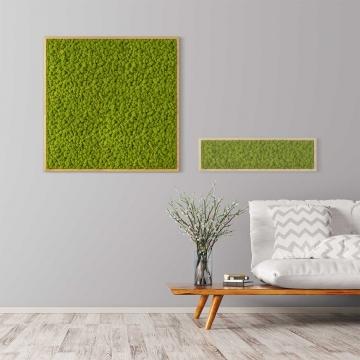 Moosbild Islandmoos 80 x 80 cm mit Tischlerrahmen aus geölter Eiche