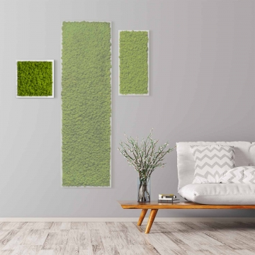 Moosbild Islandmoos 35 x 35 cm mit weißem Tischlerrahmen