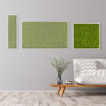 Moosbild Islandmoos 55 x 55 cm mit weißem Tischlerrahmen