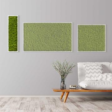 Moosbild Islandmoos 70 x 20 cm mit weißem Tischlerrahmen+