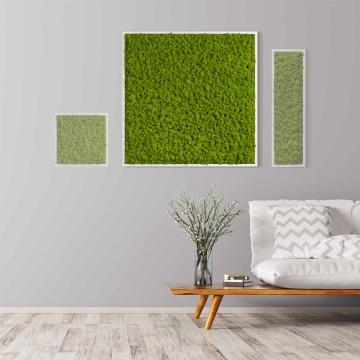 Moosbild Islandmoos 80 x 80 cm mit weißem Tischlerrahmen