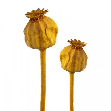 Mohn am Stiel klein in Gelb (1500 Stück)