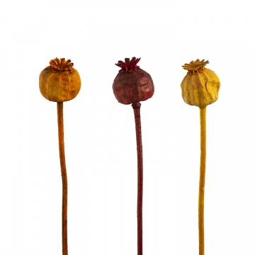Mohn am Stiel klein im 3fach Farbmix   (1500 Stück)