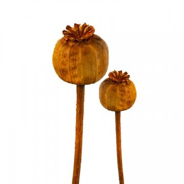 Mohn am Stiel klein in Orange   (1500 Stück)
