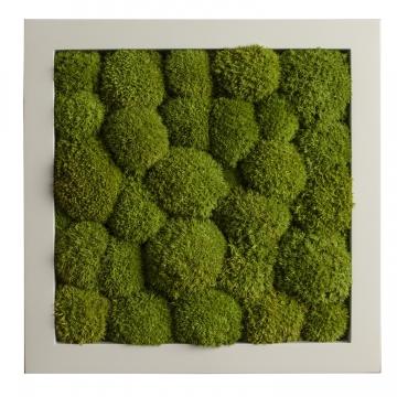 Moos•Moos Bild `Quadrat´ aus `Ballenmoos´ 36 x 36cm präpariert in Apfelgrün mit weißem Holzrahmen