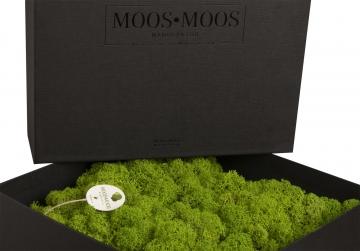 Moos•Moos Delúxe Organic Moosbild ´Amalia´ (25x25cm) in der Geschenkverpackung – Moosplatte – Dein Waldspaziergang in der Box