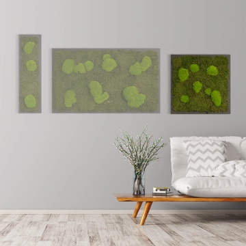 Moosbild Waldmoos & Kugelmoos 55 x 55 cm auf Holzfaserplatte anthrazit