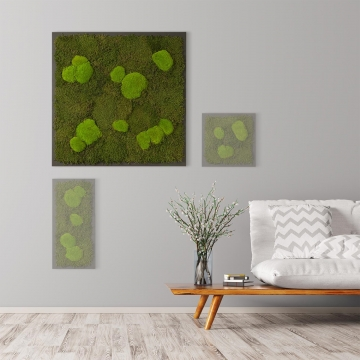 Moosbild Waldmoos & Kugelmoos 80 x 80 cm auf Holzfaserplatte anthrazit