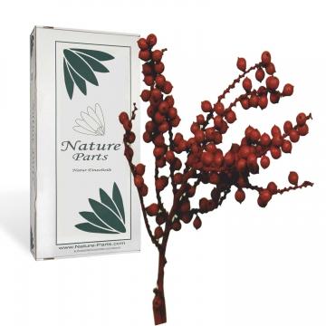 Canella Spezial Zweig in Rot [500 g]
